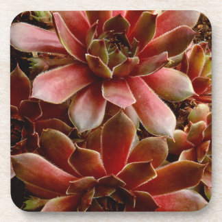 Canada, . Succulent plant Drink Coasters
