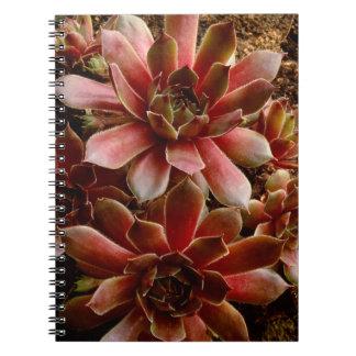 Canada, . Succulent plant Notebooks