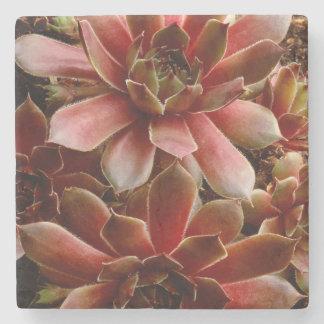 Canada, . Succulent plant Stone Beverage Coaster