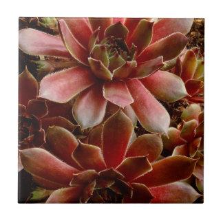 Canada, . Succulent plant Tile