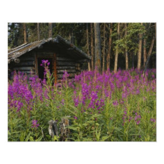 Canada, Yukon, Ross River area, Abandoned cabin Poster