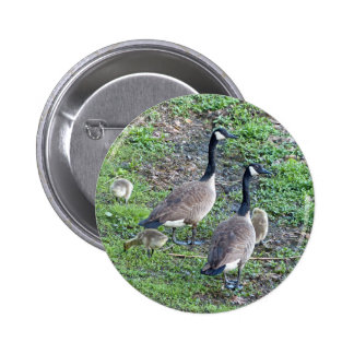 Canadian Geese Family 6 Cm Round Badge