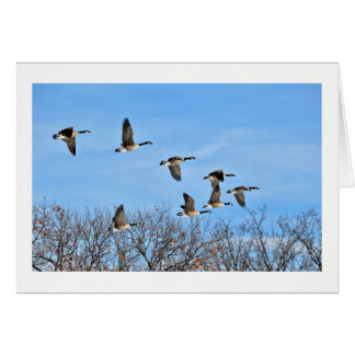 Canadian Geese in Flight Blank Card