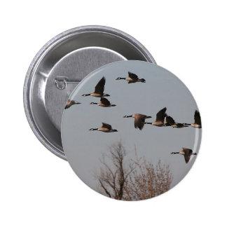 Canadian Geese in Flight II 6 Cm Round Badge