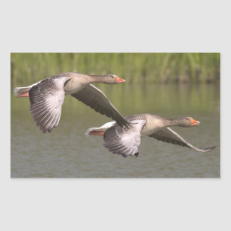 Canadian Geese Rectangular Sticker