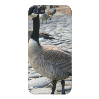 Canadian Geese Speck Case iPhone 5 Cases