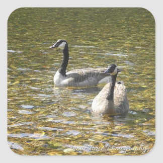 Canadian Geese ~ Stickers