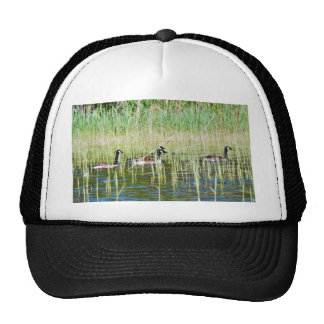 Canadian Geese Swimming Hats