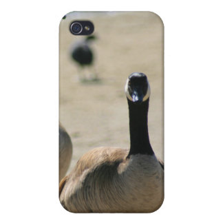 Canadian Geese Walking Speck Case iPhone 4 Cases