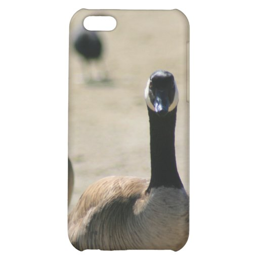 Canadian Geese Walking Speck Case Cover For iPhone 5C