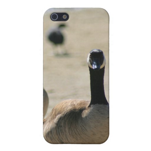 Canadian Geese Walking Speck Case iPhone 5 Case