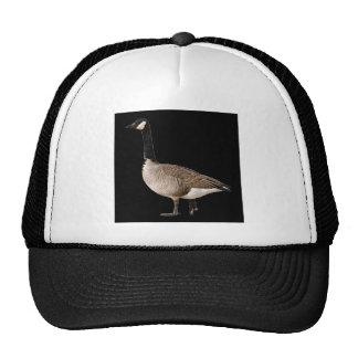 """""""Canadian Goose"""" Cap"""