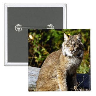 Canadian Lynx 15 Cm Square Badge