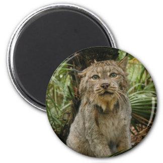 Canadian Lynx 4193e 6 Cm Round Magnet