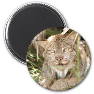 Canadian Lynx 8600 6 Cm Round Magnet