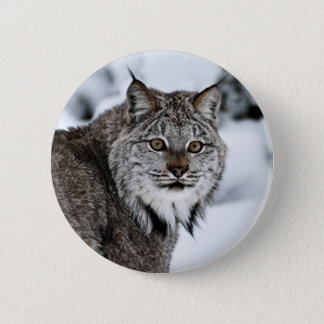 Canadian Lynx in the Snow 6 Cm Round Badge