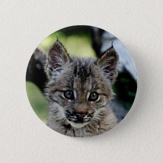Canadian Lynx Kitten 6 Cm Round Badge