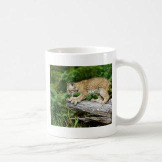 Canadian Lynx Kitten Ready to Pounce Basic White Mug