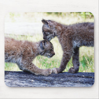 Canadian Lynx Kittens Playing on a Log Mouse Pad