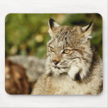 Canadian Lynx Mouse Pad
