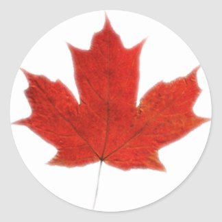 Canadian... Maple leaf Classic Round Sticker