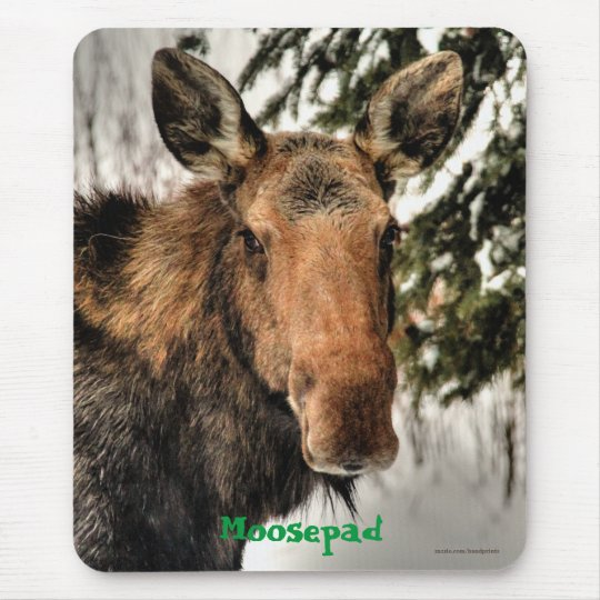 Canadian Moose Portrait Funny Wildlife Mousemat