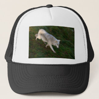 Canadian Timber Wolf Hat