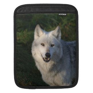 Canadian Timber Wolf iPad 2 Sleeve
