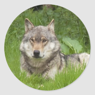 Canadian Wolf Classic Round Sticker