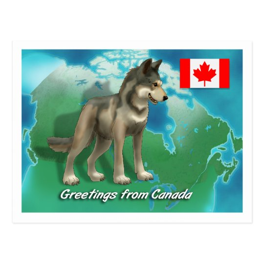 Canadian Wolf Postcard