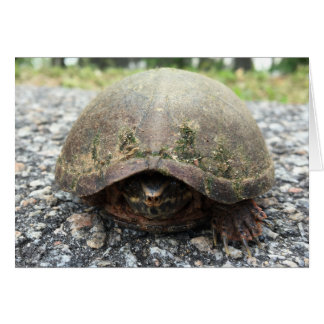 canal turtle greeting card