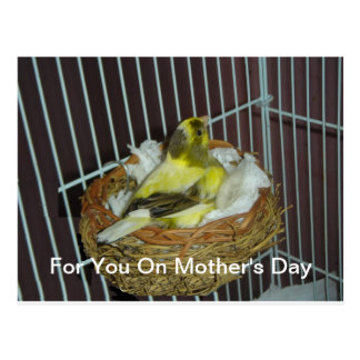 Canary Mother's Day Postcard