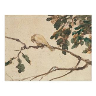 Canary on an Oak Tree Branch Postcard