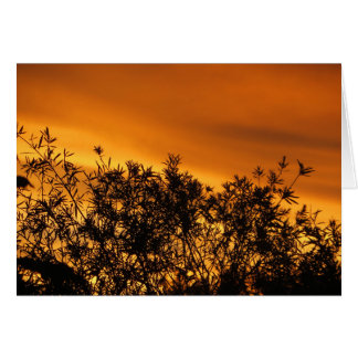 Canberra Summer Sunset Note Card