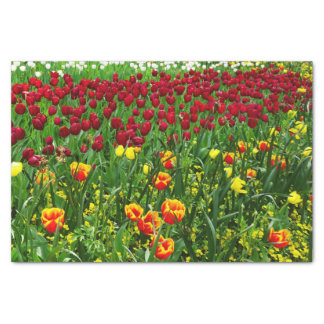 """Canberra Tulips 10"""" X 15"""" Tissue Paper"""