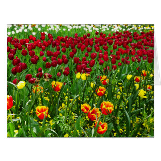Canberra Tulips Big Greeting Card