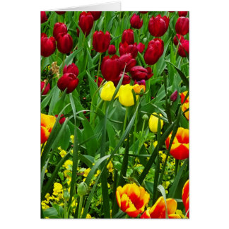 Canberra Tulips Card