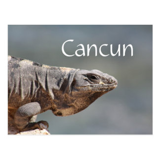 Cancun Mexico Iguana Postcard
