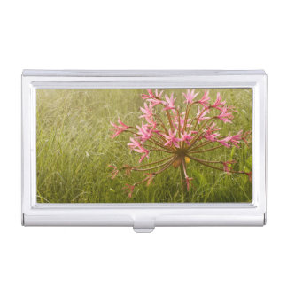 Candelabra Flower (Brunsvigia Radulosa) Business Card Holder