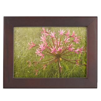 Candelabra Flower (Brunsvigia Radulosa) Keepsake Box