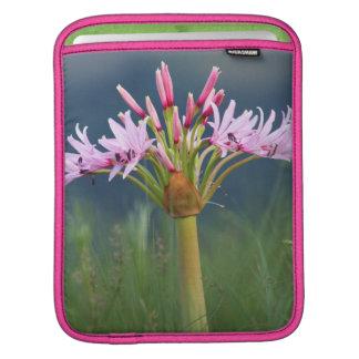 Candelabra Flower (Brunsvigia Radulosa), Umgeni iPad Sleeve