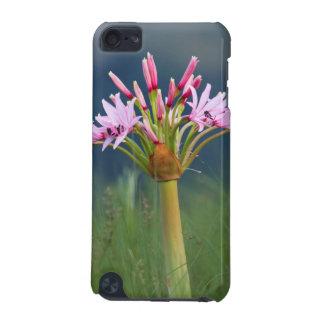 Candelabra Flower (Brunsvigia Radulosa), Umgeni iPod Touch 5G Case