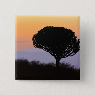 Candelabra Tree silhouetted at sunrise, 15 Cm Square Badge