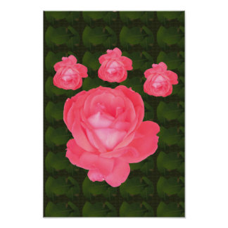 Candian wild garden parks colors flowers rose pink poster