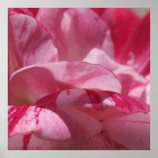 Candy Cane Petals Poster