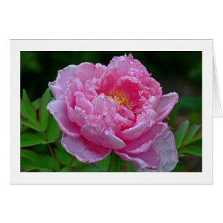 """"""" CANDY-PINK PEONY"""" NOTECARD (PHOTOG) NOTE CARD"""