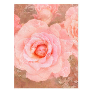 Candy roses postcard