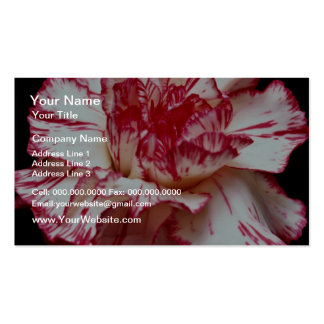 Candy-striped carnation  flowers business card template