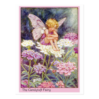 Candytuft Fairy Postcard