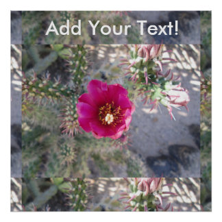 Cane Cholla Flower Purple Poster